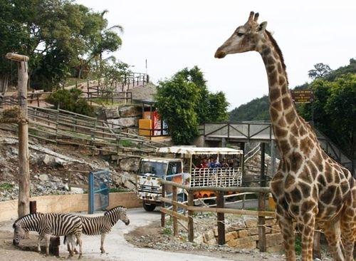 Туры в Испанию на Коста дель Соль Эстепона Парк Сельво Авентура